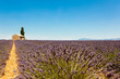 Panoramic view of lavender fields with lonely house in Provence, France