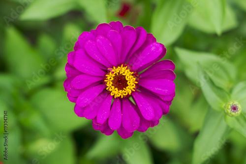 Foto Murales purple flower