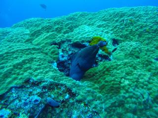 Fish underwater at Similan Marine National park
