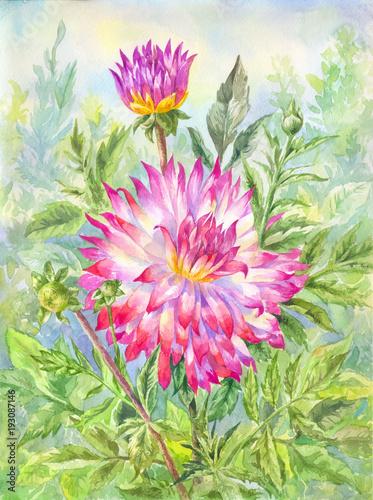 Watercolor dahlia in flowering garden. Summer illustration - 193087146