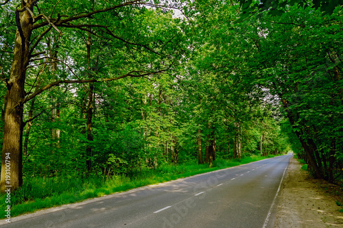 Aluminium Groene road in the forest