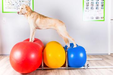 Weisser Hund bei Dehnübung
