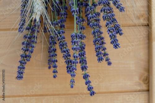 Aluminium Lavendel Lavender flowers in closeup