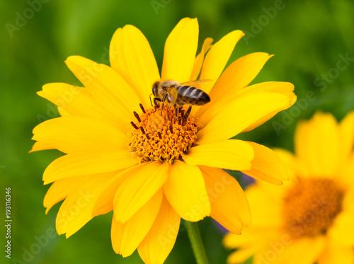 Sticker Honeybee and yellow flower.