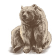 bear sitting sketch vector graphics colored drawing