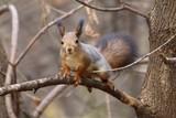 squirrel - 193122998