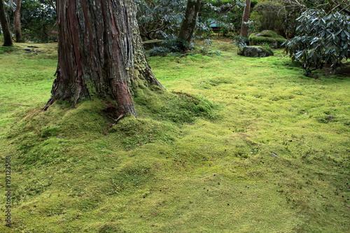 Fotobehang Pistache 三千院の苔庭