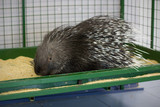 Big porcupine in a cage - 193133972