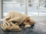 Funny dog wrapped in a warm blanket. Outside the window snow, winter - 193134303