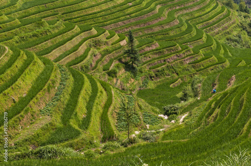 Foto op Canvas Groene Beautiful view of the Longsheng Rice Terraces near the of the Dazhai village in the province of Guangxi, in China; Concept for travel in China and beutiful and serene landscape