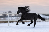 Black friesian horse with the mane flutters on wind running gallop on the snow-covered field in the winter - 193137551