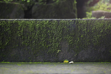 Old wet stone steps filled with moss, macro texture