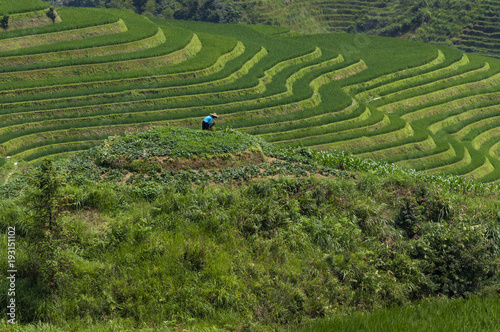 Keuken foto achterwand Rijstvelden Female farmer working the land at the Longsheng Rice Terraces near the of the Dazhai village in the province of Guangxi, in China; Concept for travel in China and beutiful and serene landscape