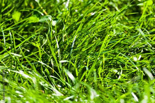 Grass, lawn, nature