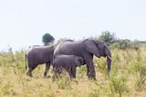 Elephants with a calf among the bushes - 193156329