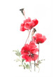 Gentle red poppy. Wild poppies. Watercolor poppy.