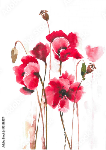 Delicate blossoming poppies on a hot summer day. Elegant red poppies.