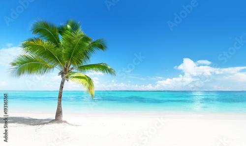 Deurstickers Tropical strand Palm on the beach
