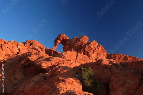 Foto op Plexiglas Bruin Elephant Rock in Valley of Fire State Park, USA. Valley of Fire State Park is the oldest state park in Nevada, USA