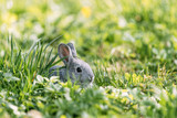 Small grey rabbit in green grass closeup. Can be used like Easter background. Animal photography - 193167925