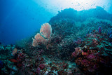 School of tropical fish on the colorful underwater coral reef. Scuba diving with sea wildlife. Snorkeling on the reef with fish. Sea lily, corals and anthias fish. - 193172364