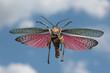 bunte Heuschrecke im Flug vor blauem Himmel und Wolken