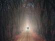 canvas print picture - der Weg in das Licht