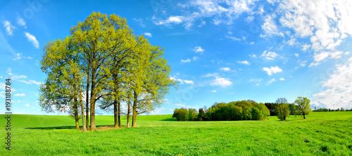 Grüne Wiese mit Baumgruppe unter blauem Himmel im Frühling - 193188784