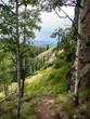 Mountain View Between Aspen Trees