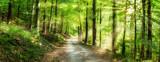 Grünes Wald Panorama im Sonnenlicht - 193202538