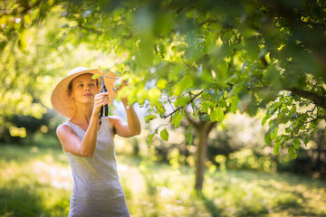Pretty, young woman gardening in her garden, cutting branches, taking care of her lovely orchard
