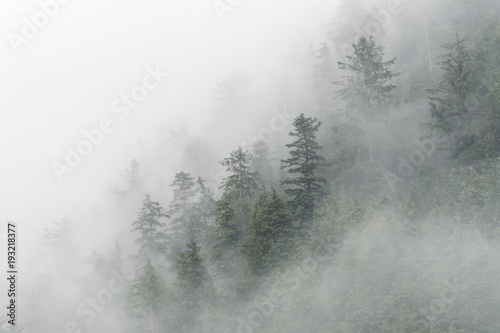 Spruce trees & fog in Peril Strait;  Alaska - 193218377