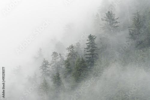 swierkowe-drzewa-i-mgla-w-ciesninie-niebezpieczenstwa-alaska
