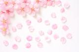 桜の花 白背景     - 193220763