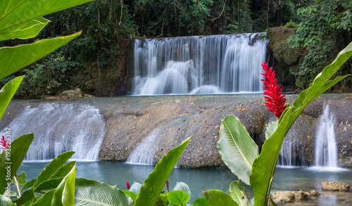 Scenic waterfalls and lrd flower in Jamaica - 193223387