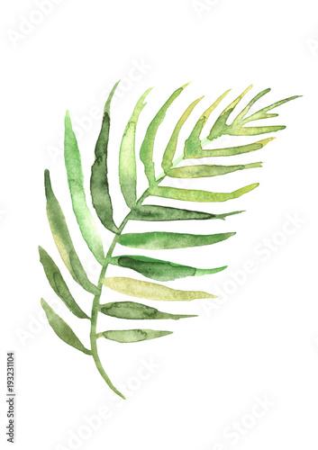 aquarellzeichnung-eines-blattes-einer-palme-grunes-tropisches-palmblatt-hand-gezeichnete-illustratio