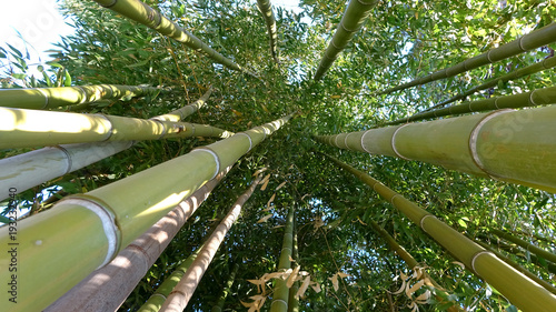 Fotobehang Bamboe Bamboo grove, bamboo forest natural green background