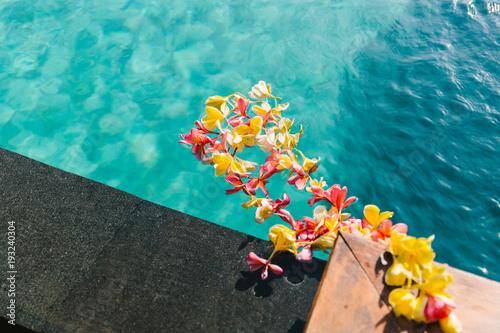 Plexiglas Bali Plumeria flowers (frangipani) floating in water pool. Indonesia, Bali.