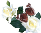 isolated brown butterfly on white roses - 193240928