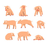 Cute little pig set, funny piggy in different actions set of cartoon vector Illustrations isolated on a white background