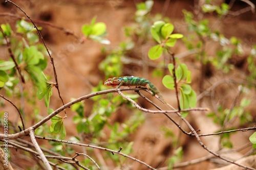 Fotobehang Kameleon Cameleon close-up. Poema del Mar, Aquarium, Las Palmas