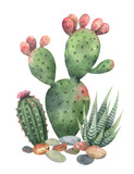 Watercolor vector collection of cacti and succulents plants isolated on white background. - 193274786