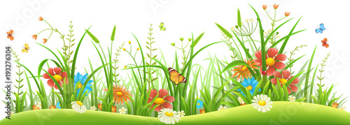 Naklejka Green grass with spring flowers and butterflies on white background