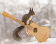 red squirrel is sitting on a guitar