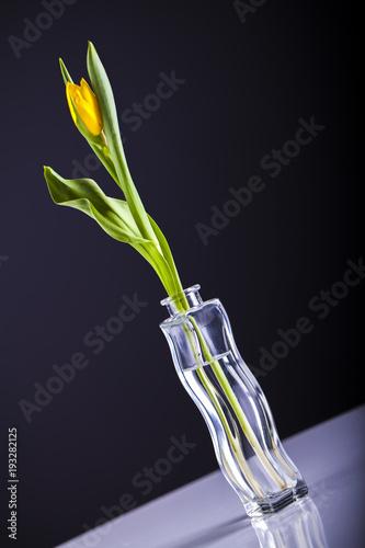 Fototapeta Tulipan w wazonie