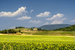 Quadro Summer landscape near Perugia