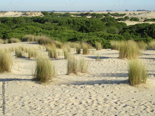 Aluminium Beige Sand dunes in the Donana National Park