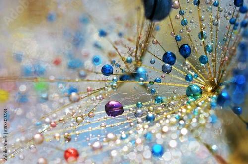 Fototapeta colorful drops