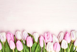 Pink and white tulips border on pink background. Copy space, top view. Holiday background