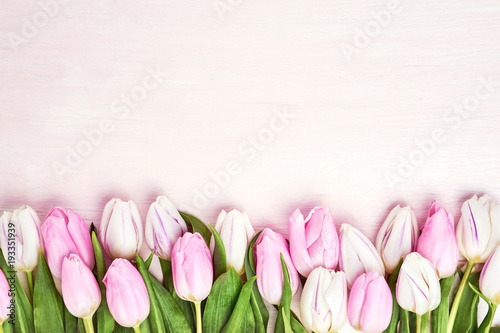 Fototapeta Pink and white tulips border on pink background. Copy space, top view. Holiday background
